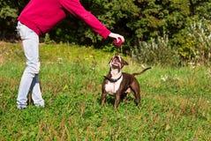 Hund, der Ball mit seinem Meister spielt Stockfotos