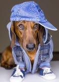 Hund in der Baumwollschutzkappe Stockbild