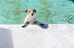 Hund, der am Brunnen wie am Swimmingpool an den sonnigen Sommertagen spielt Stockfotos