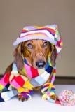Hund in der bunten Kleidung Stockbild