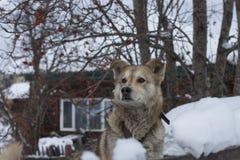 Hund, der das Yard schützt Stockfotos