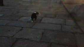 Hund, der an den chinesischen Schriftzeichen spielt und bellt stock footage
