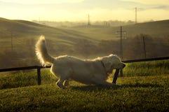 Hund, der in den Hügeln von Toskana spielt Lizenzfreies Stockfoto