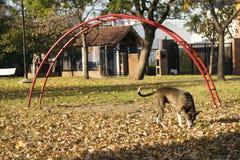 Hund, der in den Park geht Lizenzfreie Stockfotos