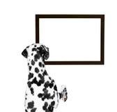 Hund, der den Rahmen betrachtet Lizenzfreie Stockfotografie