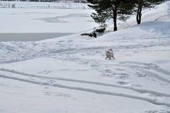 Hund, der in den Schnee läuft lizenzfreie stockbilder