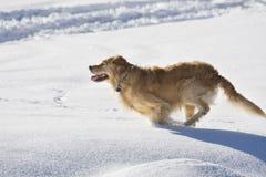 Hund, der in den Schnee läuft stockbild