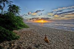 Hund, der den Sonnenuntergang auf dem Nordufer - Hawaii aufpasst stockfoto