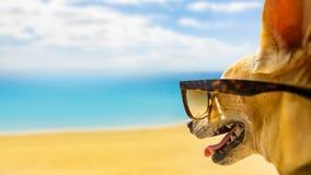 Hund, der den Strand auf Sommer aufpasst Stockfotografie