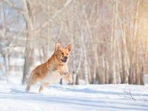 Hund, der den Sun pursuiting ist Stockfotografie