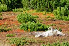 Hund, der in der bunten Vegetation schläft stockfotos