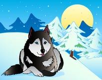 Hund, der in der schneebedeckten Landschaft liegt Lizenzfreies Stockfoto