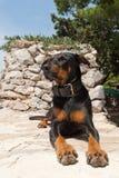 Hund, der in der Sonne kühlt Stockfotos