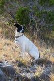 Hund, der in der Sonne in Mischgras sitzt Lizenzfreies Stockfoto