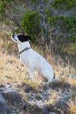 Hund, der in der Sonne und im Gras sitzt Lizenzfreie Stockfotografie