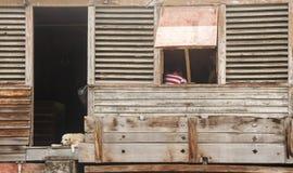 Hund, der in der Tür des alten hölzernen Gebäudes stillsteht Lizenzfreie Stockfotografie