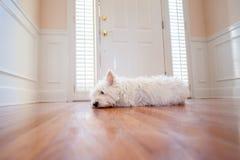 Hund, der an der Tür wartet Stockfotografie