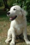 Hund, der die Sonne sitzt Lizenzfreie Stockfotos