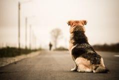 Hund, der in die Straße wartet Stockfoto
