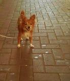 Hund, der die Touristen betrachtet stockbild
