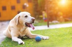 Hund, der draußen spielt Lizenzfreie Stockfotografie