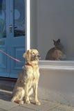 Hund, der durch Birmane Cat In Window Display sitzt Stockfotografie