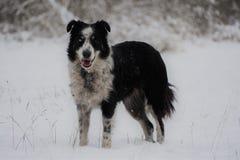 Hund, der durch Schnee läuft stockfoto