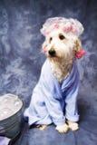 Hund in der Dusche-Schutzkappe Stockbild