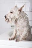 Hund, der ein Bad erhält lizenzfreies stockfoto