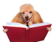 Hund, der ein Buch liest Stockfoto