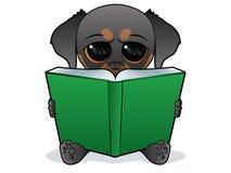 Hund, der ein Grünbuch liest Stockfotos