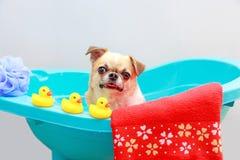 Hund, der eine Dusche nimmt lizenzfreie stockfotos