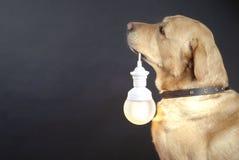 Hund, der eine Lampe anhält Stockbild