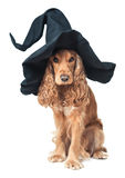 Hund, der in einem Hexenhut sitzt stockbilder