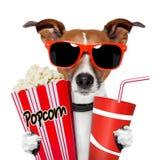 Hund, der einen Film überwacht Lizenzfreie Stockbilder
