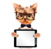 Hund, der einen Halsbogen mit Tabletten-PC trägt Stockbild