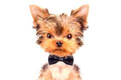 Hund, der einen Halsbogen trägt Stockbild