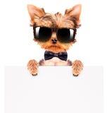 Hund, der einen Halsbogen und -schatten mit Fahne trägt Stockfotos