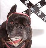 Hund, der einen Schal trägt lizenzfreie stockfotografie