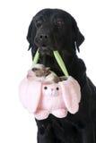 Hund, der einen Welpen in einem Korb hält Stockbilder