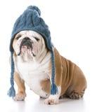 Hund, der einen Winterhut trägt Stockfoto