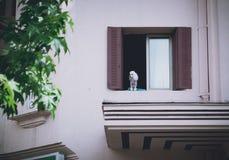 Hund, der entlang des Fensters anstarrt lizenzfreies stockbild