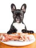 Hund der französischen Bulldogge Lizenzfreie Stockbilder