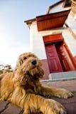 Hund an der Frontseite des Hauses stockbilder