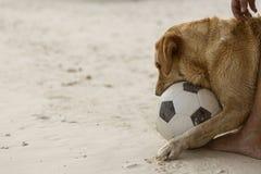 Hund, der Fußball spielt stockfoto