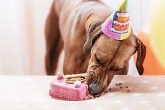 Hund, der Geburtstag feiert Stockbild