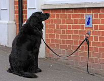 Hund, der geduldig wartet Lizenzfreies Stockbild