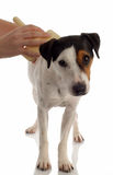 Hund, der gepflegt wird stockfotos