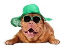 Hund, der grüne Strohhut- und Sonnegläser trägt lizenzfreie stockfotos