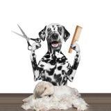 Hund, der groomung mit Scheren und Kamm tut stockbild